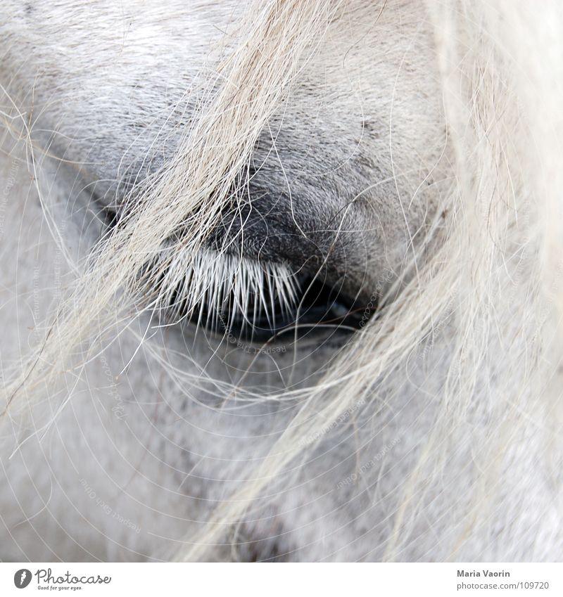 Pferdesträhnen im Gesicht Säugetier Haarsträhne Wimpern Zwinkern groß nah Trauer Fell Verzweiflung Verkehr Huftier Blick Traurigkeit Haare & Frisuren