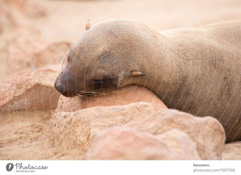 ich höre nix. Natur Ferien & Urlaub & Reisen Einsamkeit Tier Strand Umwelt Küste Sand liegen Erde Wildtier Tourismus Ausflug beobachten schlafen Afrika
