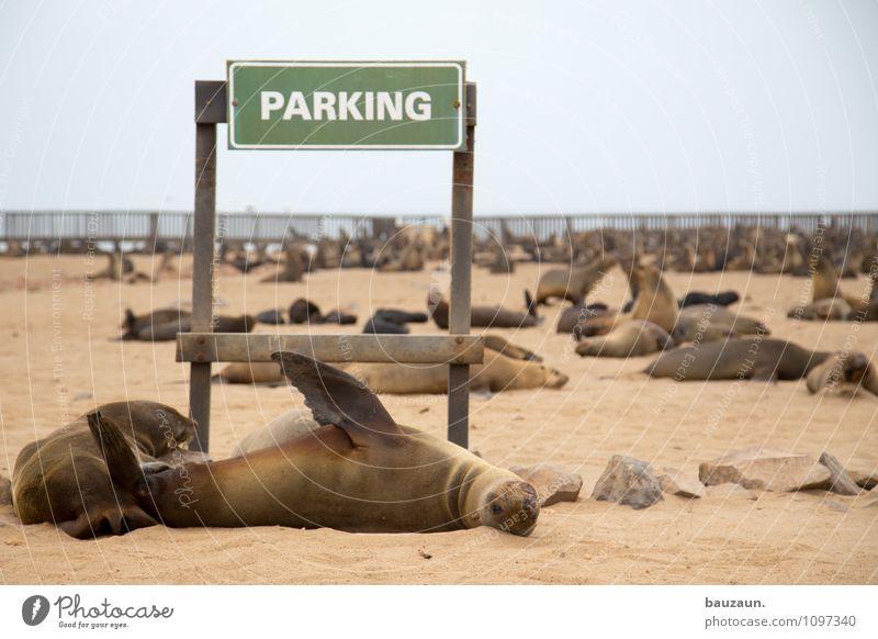 schild verstanden. Ferien & Urlaub & Reisen Tourismus Ausflug Sightseeing Sommer Umwelt Natur Landschaft Erde Sand Wolken Klima Wetter Küste Strand Cape Cross