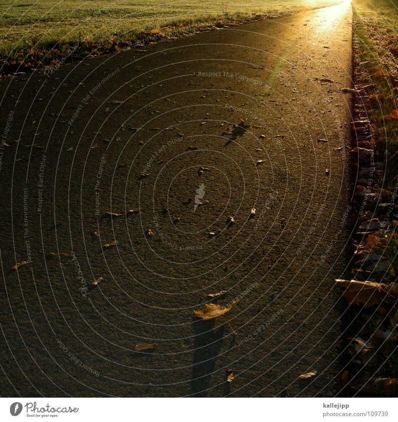 goldsucher Baum Pflanze Blatt Wolken Ferne Herbst Freiheit Wege & Pfade Feld Gold Umwelt frei Horizont Zukunft Sträucher Ziel
