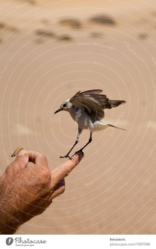 landung. Natur Ferien & Urlaub & Reisen Sommer Hand Tier Freiheit fliegen Vogel Sand Erde Wildtier Tourismus Flügel beobachten Schönes Wetter trocken