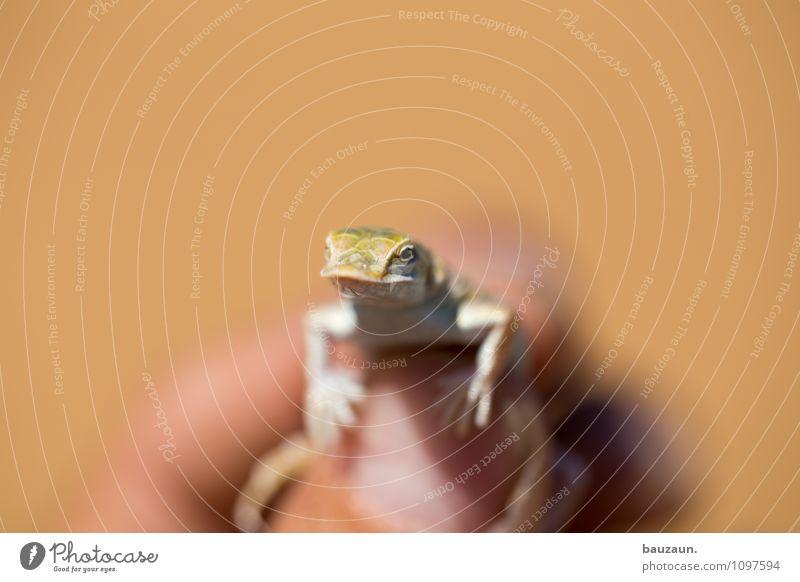 lizard. Natur Ferien & Urlaub & Reisen schön Sommer Hand Tier glänzend Wildtier Tourismus ästhetisch Ausflug beobachten Abenteuer berühren trocken Wüste