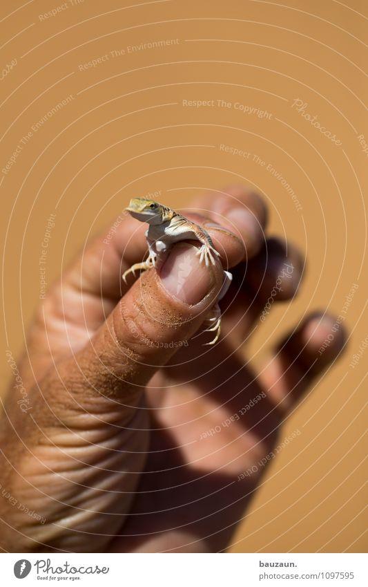 eidechse. Ferien & Urlaub & Reisen Tourismus Ausflug Abenteuer Sightseeing Hand Finger Natur Erde Sand Sommer Namibia Afrika Tier Wildtier Tiergesicht Krallen