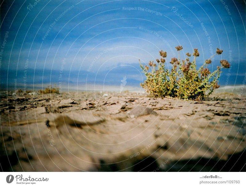 Überlebenskünstler Himmel Natur blau Farbe Pflanze Landschaft Ferne Umwelt Wärme Horizont braun Kraft Idylle Erde Wachstum Blühend