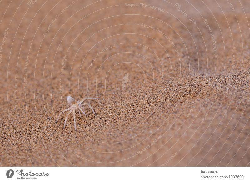 white lady. Natur Ferien & Urlaub & Reisen Tier Sand Erde Wildtier Tourismus Ausflug beobachten Abenteuer trocken nah Wüste Mut Afrika exotisch