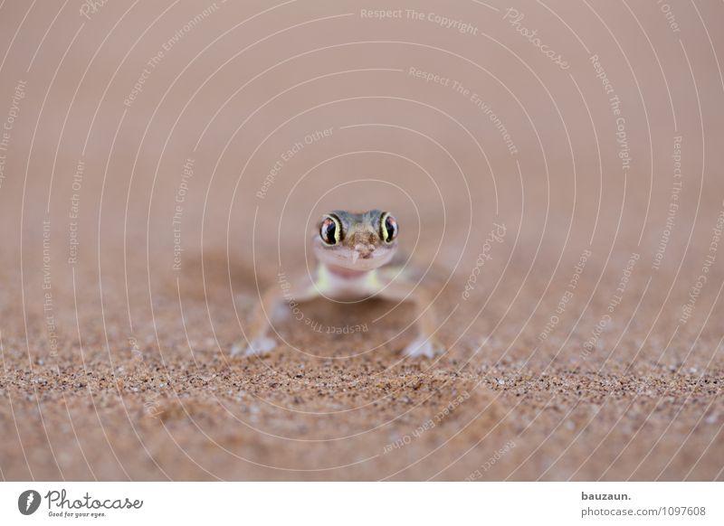 hey du. Ferien & Urlaub & Reisen Tourismus Ausflug Abenteuer Sightseeing Sommer Natur Erde Sand Wüste Namibia Afrika Tier Wildtier Tiergesicht Gecko 1 Auge
