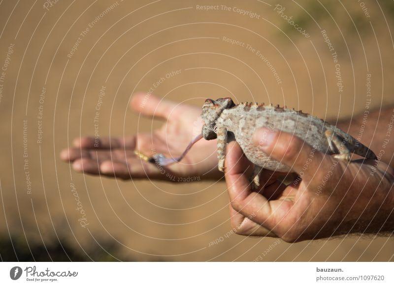 hab dich. Ferien & Urlaub & Reisen Tourismus Ausflug Abenteuer Sightseeing Hand Natur Schönes Wetter Wüste Namibia Afrika Tier Wildtier Wurm Chamäleon 1 Zunge