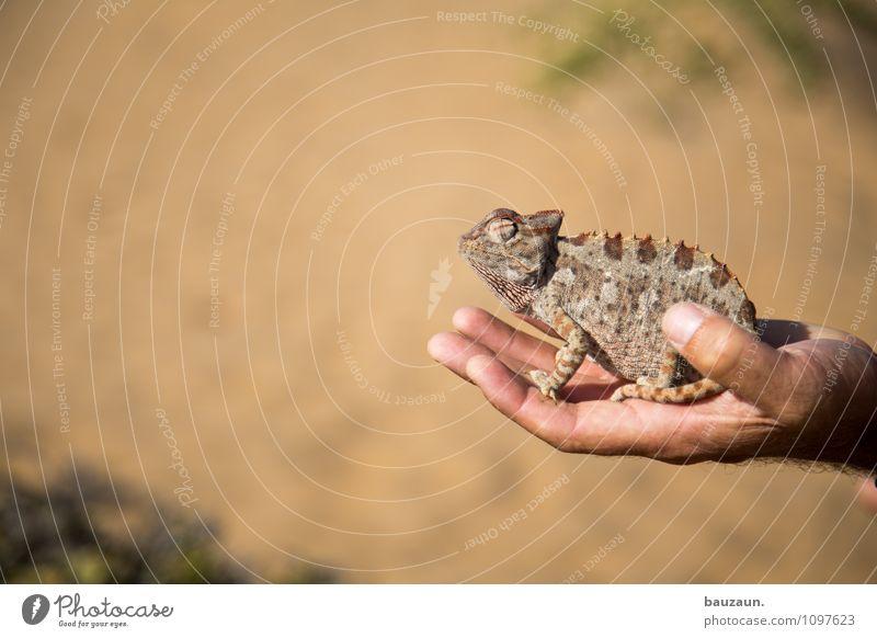 ich seh dich. Natur Ferien & Urlaub & Reisen Sommer Hand Tier Sand Erde Wildtier Tourismus Ausflug beobachten Schönes Wetter Abenteuer berühren trocken Wüste