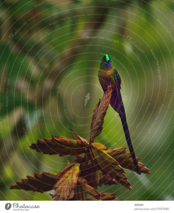 schön Tier natürlich Holz Vogel Wildtier