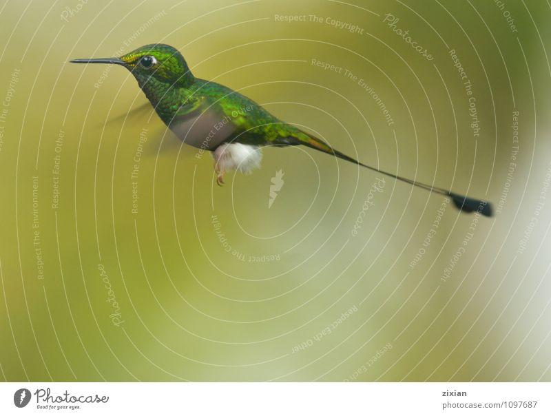 schön Tier Vogel Zufriedenheit Wildtier