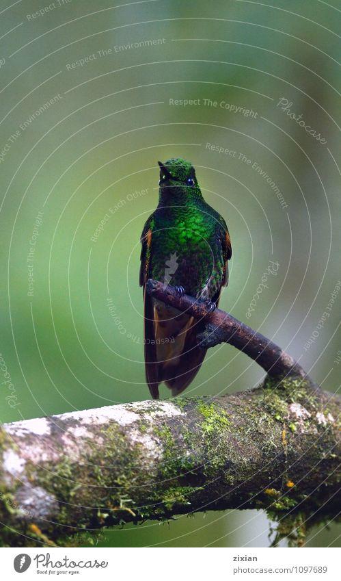 blau grün Tier Vogel Wildtier Leder