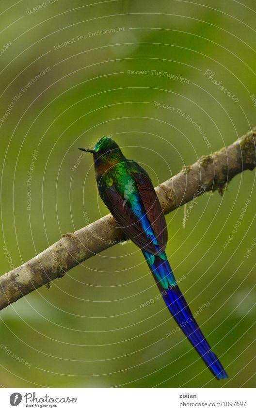 blau Tier Holz Vogel Wildtier sitzen hängen Leder
