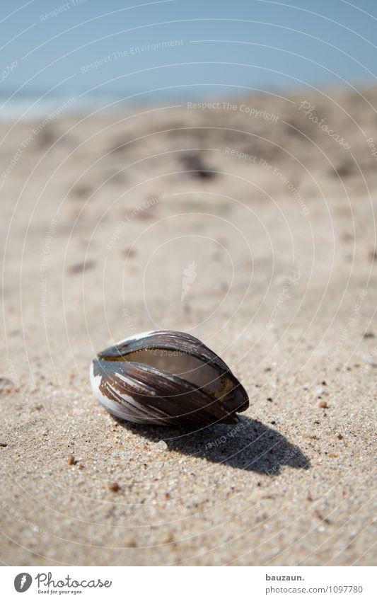 mies. Ferien & Urlaub & Reisen Tourismus Ausflug Umwelt Natur Landschaft Erde Sand Wasser Sommer Klima Wetter Schönes Wetter Küste Strand Meer Swakopmund