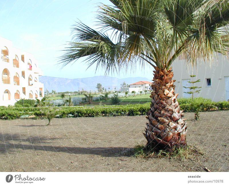 Palme auf Kreta Sonne Sommer