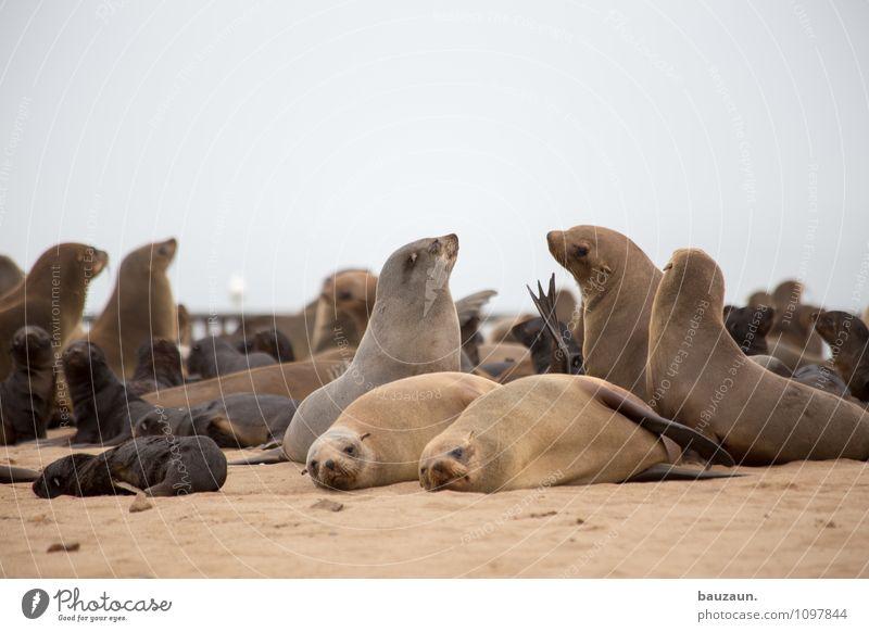 zusammen ist man weniger allein. Ferien & Urlaub & Reisen Tourismus Ausflug Sightseeing Strand Umwelt Natur Landschaft Erde Sand Wolken Küste Cape Cross Namibia