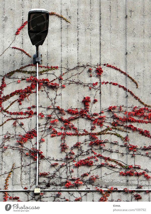 Fassadenkletterer Pflanze Lampe Herbst Wand Stein Mauer Beleuchtung Beton Ordnung Elektrizität Ecke Kabel Denkmal Wahrzeichen chaotisch Gegenteil
