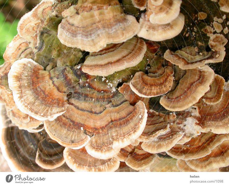 pilzig 01 Baum Pilz morsch