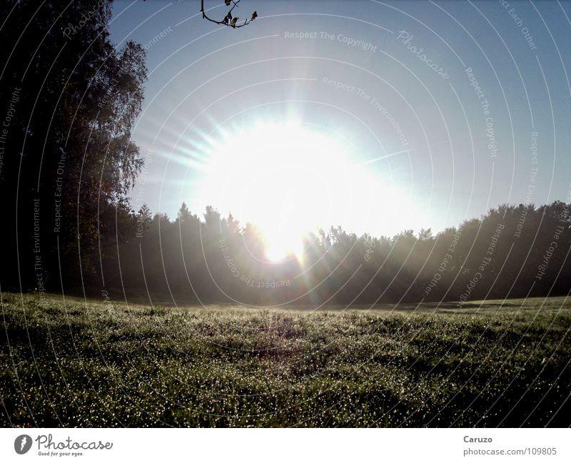 Morgensonne2 Sonnenaufgang Licht hell Strahlung Sonnenstrahlen blenden Gras Baum Wald Physik Himmelskörper & Weltall Langeweile Siegwinden Seil Treppe