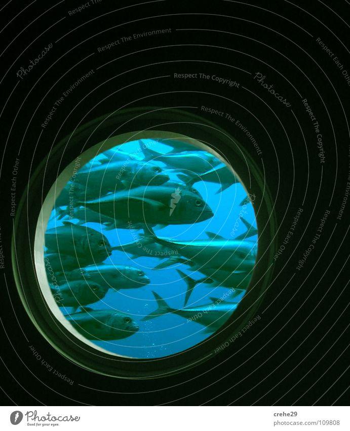 bei60oder90grad? Wasser Meer grün blau Ferien & Urlaub & Reisen schwarz Stil Fenster Wasserfahrzeug Glas Tür nass Fisch mehrere Küche rund