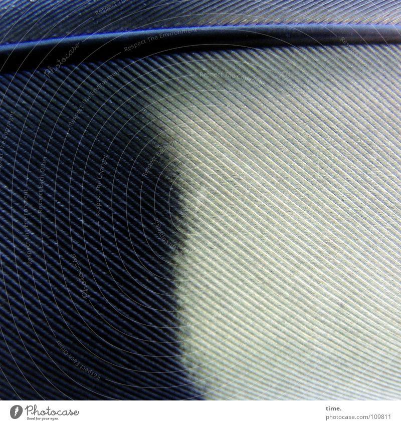 Auch eine Ordnung des Lebens Strukturen & Formen schön ruhig Natur Luft Wind Verkehrsmittel Bekleidung Vogel Spielzeug Sammlerstück fliegen blau schwarz weiß