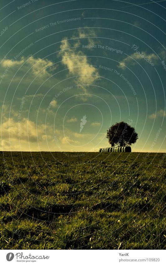 herbstfeld Himmel Baum grün blau Wolken gelb Ferne Herbst Wiese Gras Beleuchtung Feld Wind Wetter Horizont Ast