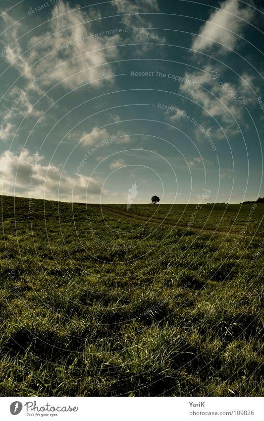 bäumlein Ferne Fußweg Gras Wiese Feld Herbst Wolken schlechtes Wetter grün gelb Wind HDR Wege & Pfade Baumkrone Ast Himmel woken blau Kontrast