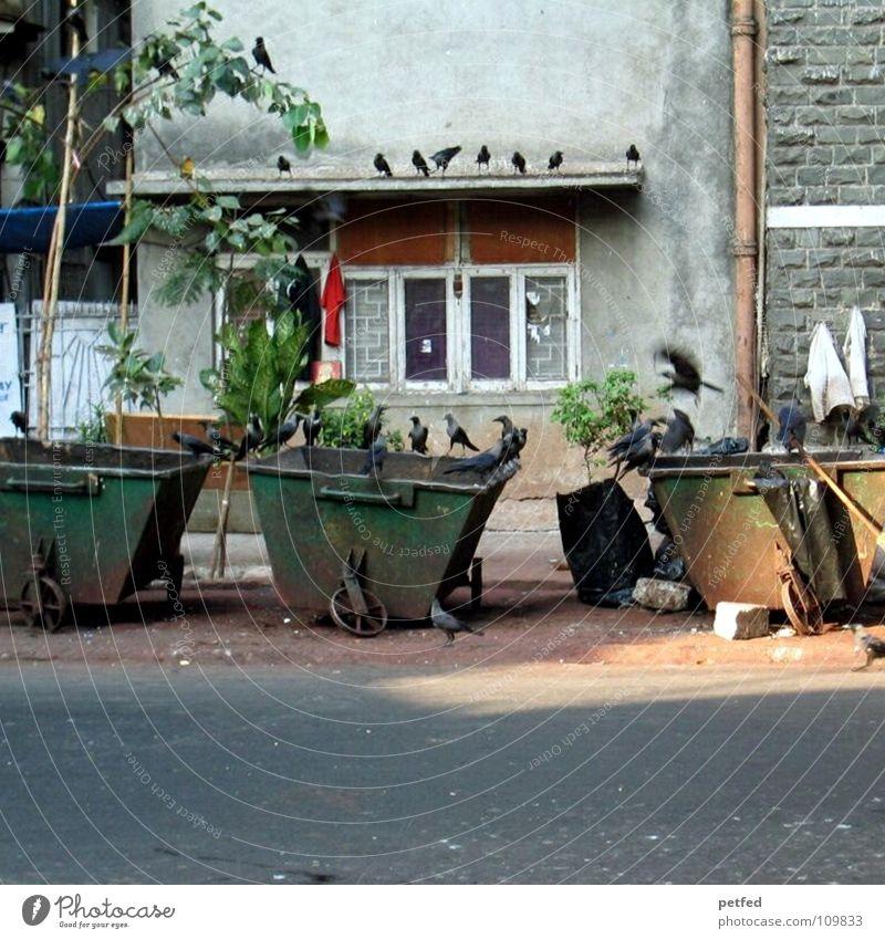 Die Vögel Müll Müllbehälter Vogel schwarz Krähe Indien Bombay Fenster Haus Kultur fremd Graffiti Straße Armut Arme Alltagsfotografie außergewöhnlich
