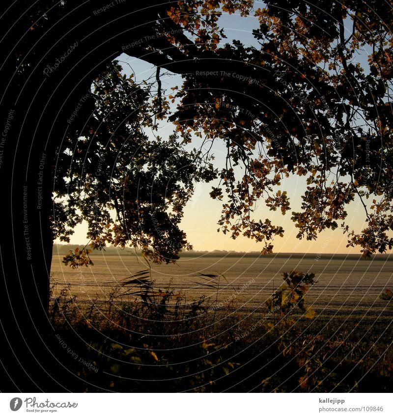 bambi Baum rot Pflanze Sonne Blatt Landschaft kalt Lebensmittel Herbst träumen Horizont braun Hintergrundbild Erde Feld Gold