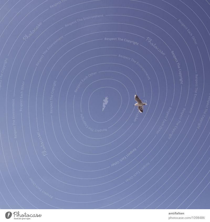 Wegfliegen Umwelt Natur Urelemente Luft Himmel Wolkenloser Himmel Frühling Sommer Klima Wetter Schönes Wetter Tier Vogel Flügel Möwe Schnabel 1 ästhetisch