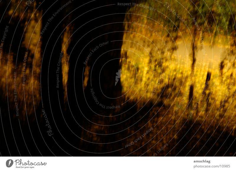 Märchenwald Baum gelb Wald dunkel glänzend
