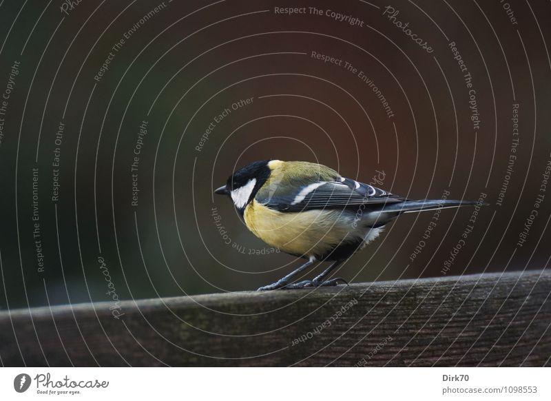 Auf dem Sprung Natur grün weiß Tier schwarz Umwelt gelb Leben natürlich grau Holz Garten fliegen Vogel Häusliches Leben Wildtier