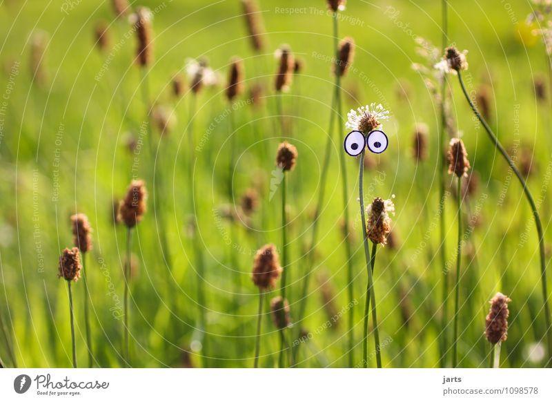 00 Auge Pflanze Schönes Wetter Gras Wiese Blick natürlich Neugier Farbfoto Außenaufnahme Nahaufnahme Menschenleer Textfreiraum links Textfreiraum oben