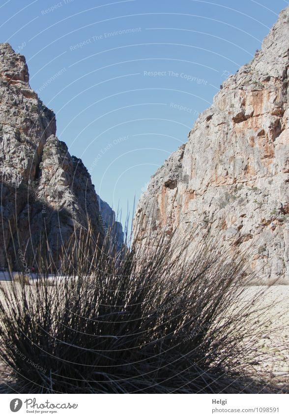 Torrent de Pareis... Natur Ferien & Urlaub & Reisen Pflanze Landschaft Umwelt Berge u. Gebirge Gras Frühling natürlich grau außergewöhnlich braun Felsen Idylle