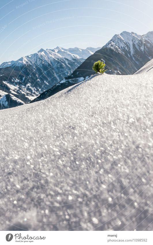 Latschenschopf in Eiskristallhügel Tourismus Ausflug Abenteuer Freiheit Winter Schnee Winterurlaub Berge u. Gebirge Natur Landschaft Himmel Wolkenloser Himmel