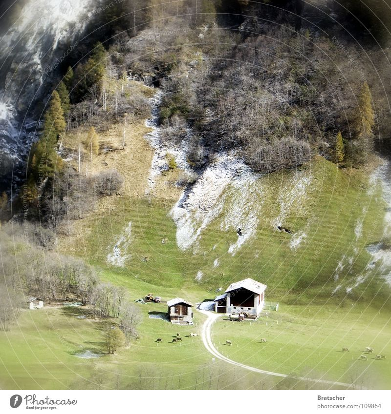 Heidi.... Ferien & Urlaub & Reisen Baum Einsamkeit Winter Ferne Wiese Berge u. Gebirge Schnee Herbst Alpen Idylle Romantik Aussicht Dorf Bauernhof Schweiz