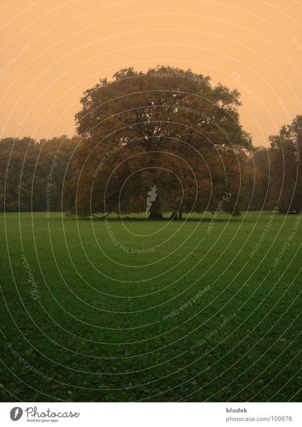 Im Herbst Baum Wiese Macht Bremen Eiche