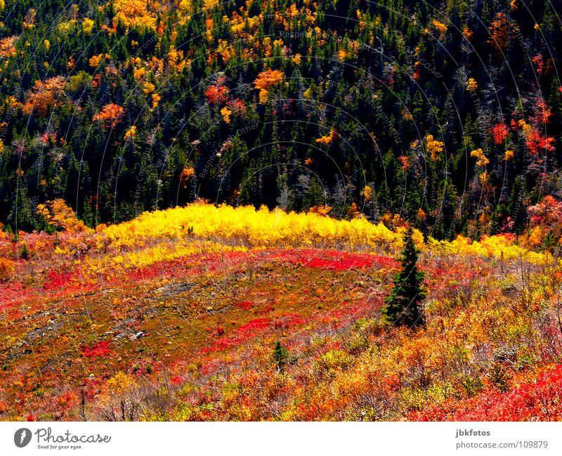 +++Indian Summer+++ Baum grün Sommer Winter gelb Farbe Wald Wiese Herbst Berge u. Gebirge Frühling Farbstoff Landschaft orange Ende Hügel