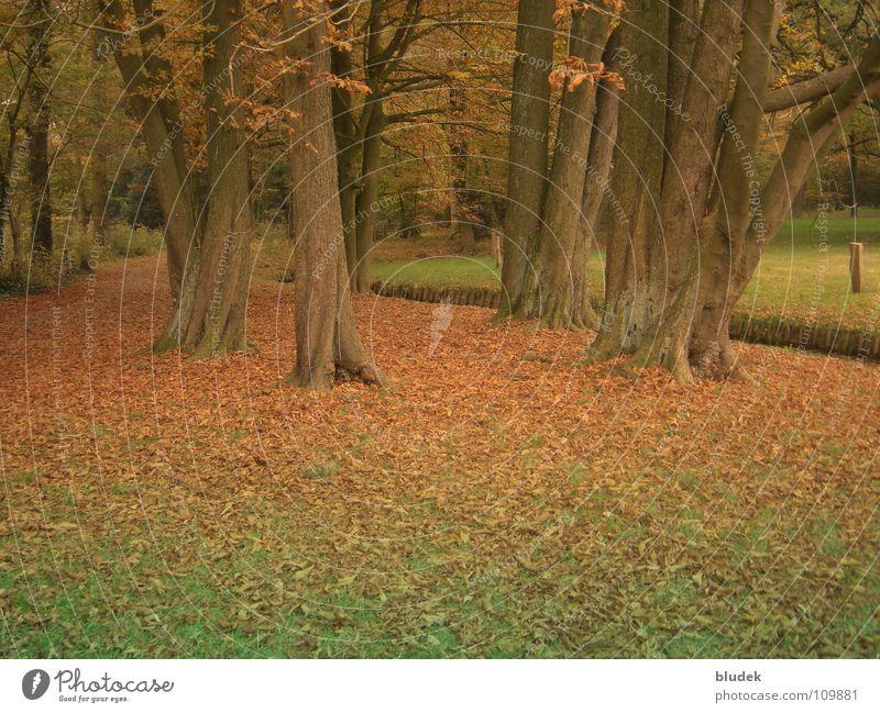 Herbst II Baum Blatt Bremen Baumstamm Ast Wurzel Bürgerpark