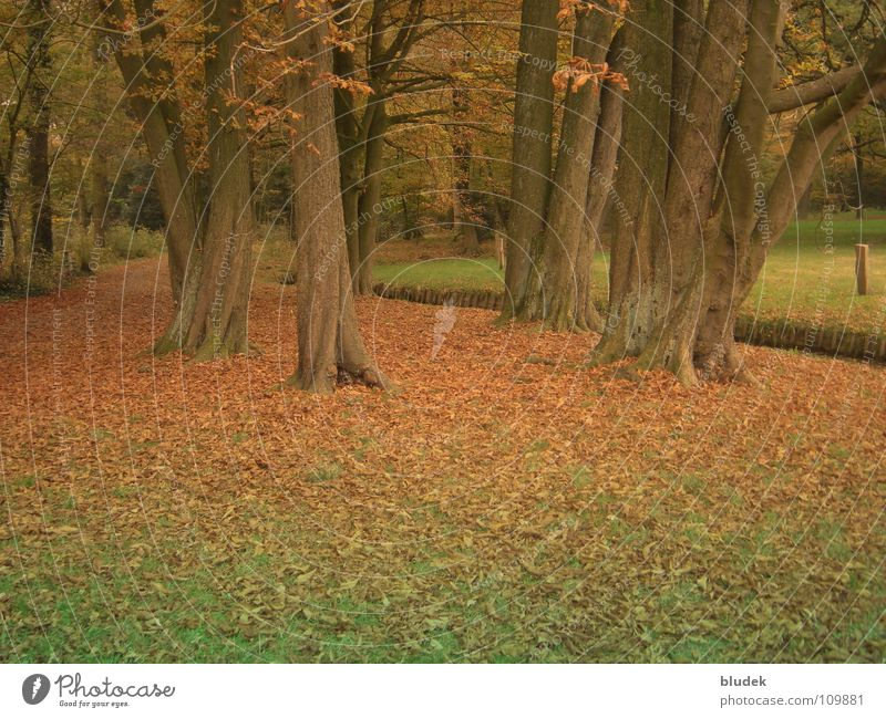 Herbst II Baum Blatt Ast Baumstamm Bremen Wurzel
