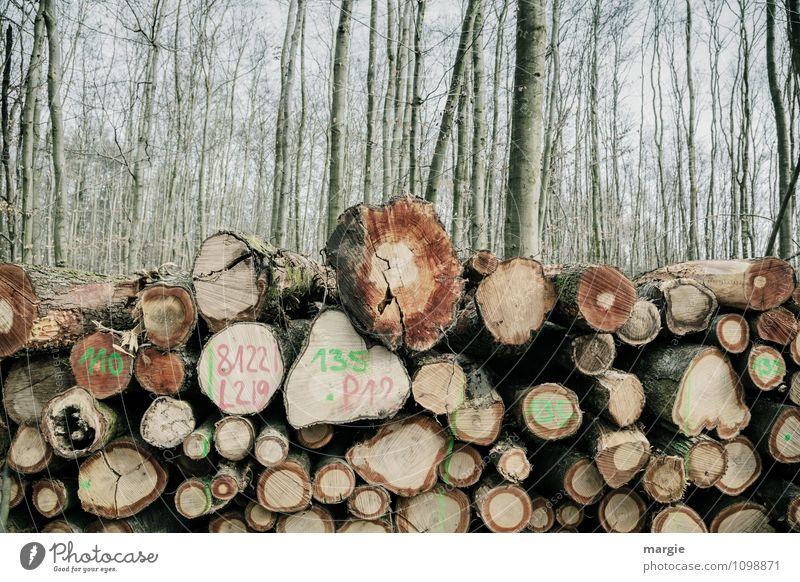 Waldarbeit:  Ein Stapel Baumstämme im Wald Förster Waldarbeiter Landwirtschaft Forstwirtschaft Handwerk Energiewirtschaft Umwelt Natur Frühling Klima Sträucher