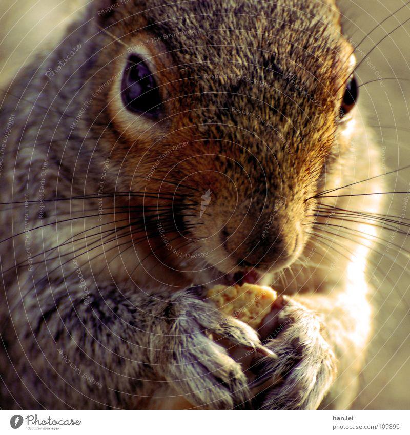 Mjam Mjam Mjam Ernährung Tier Pfote Fressen klein lecker süß Appetit & Hunger Eichhörnchen Nagetiere Säugetier squirrel Mjam mjam mjam Farbfoto Außenaufnahme