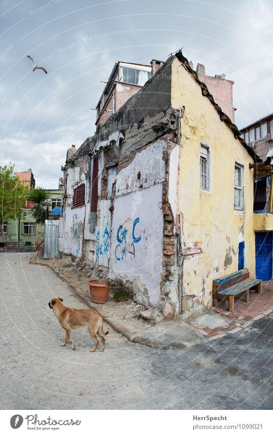 Back Street Boy Hund alt Haus Tier Wand Traurigkeit Architektur Gebäude Mauer außergewöhnlich Vogel Fassade trist Armut bedrohlich kaputt