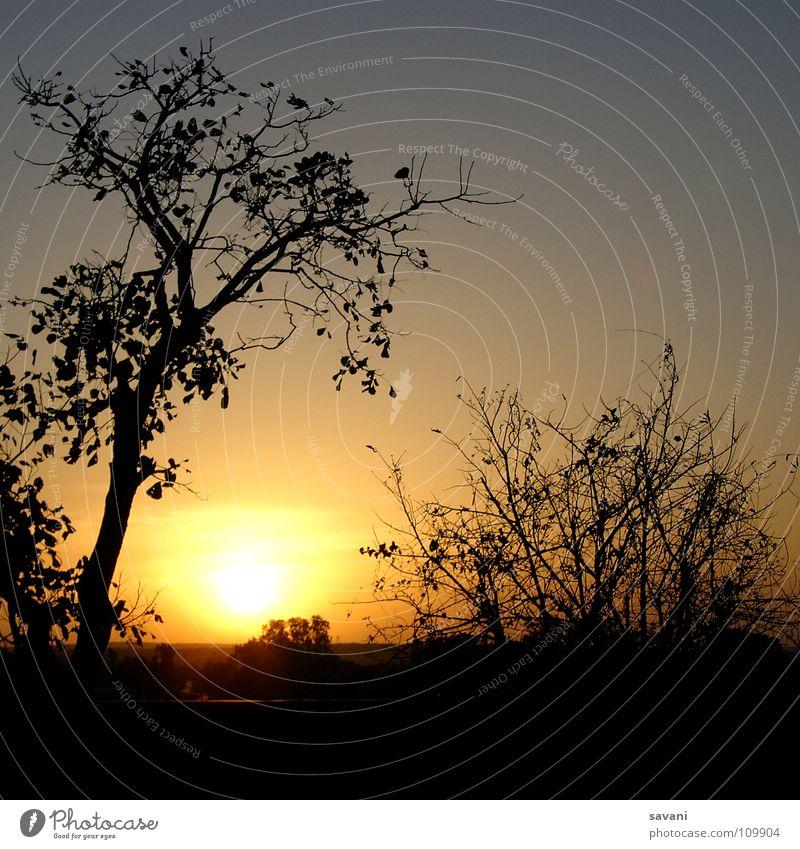 Sunset Natur Himmel Baum Sonne Ferien & Urlaub & Reisen ruhig träumen Traurigkeit Landschaft Romantik Indien Ruine Abenddämmerung Rahmen Safari