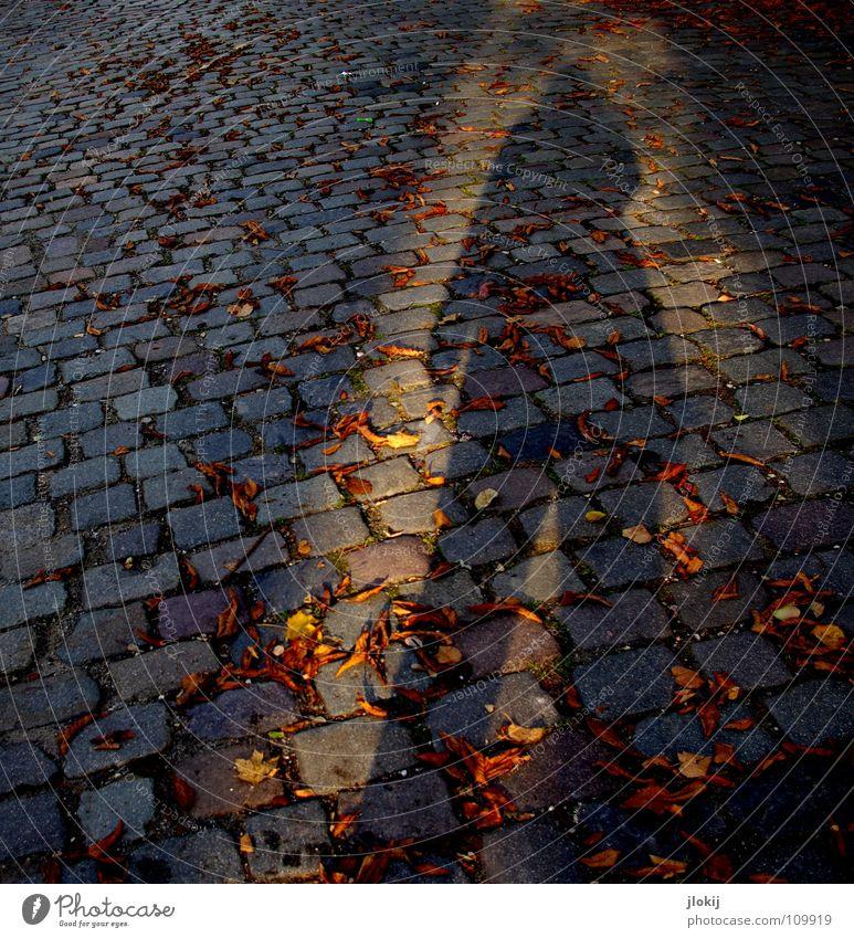 Shadow Kopfsteinpflaster Herbst Blatt Strahlung Licht Abendsonne Geometrie Jacke Hose lang gezogen Jahreszeiten flach Verkehrswege Mensch Stein Schatten shadow
