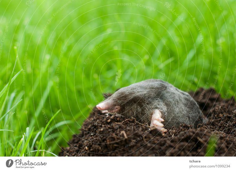 Natur Tier schwarz Gesicht Gras Glück klein Garten Erde wild Wildtier Lächeln Boden Säugetier horizontal