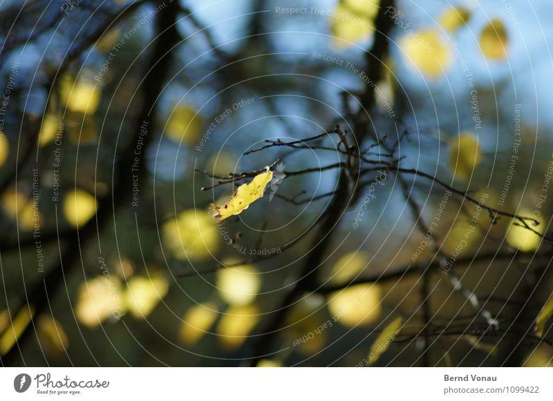 Bärensee 2013 | Restbestand Umwelt Natur Pflanze Himmel Herbst Schönes Wetter Baum Blatt blau grün schwarz Ast herbstlich Herbstlaub scheinend Tod trocken