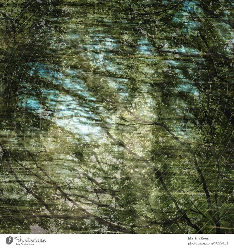 Sonnentage Himmel blau grün Farbe Sommer Baum Landschaft Umwelt Stimmung Kunst träumen Wellen modern Sträucher verrückt ästhetisch