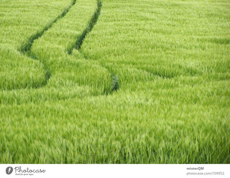 keep straight on Feld grün Ausweg Spaziergang wandern Fußweg wohin Windspiel Streifen Muster Reifenspuren Fahrbahn ruhig Mittag Weizen Hafer Roggen Stroh unreif