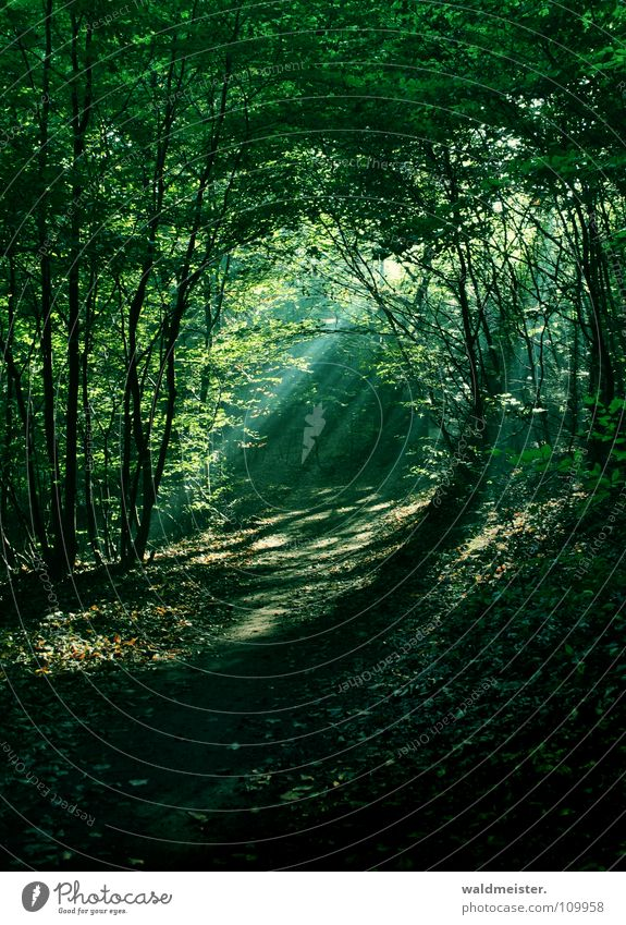 Morgens im Wald Baum Sonne grün Nebel Romantik Urwald feucht mystisch Märchen Zauberei u. Magie Lichtstrahl Märchenwald