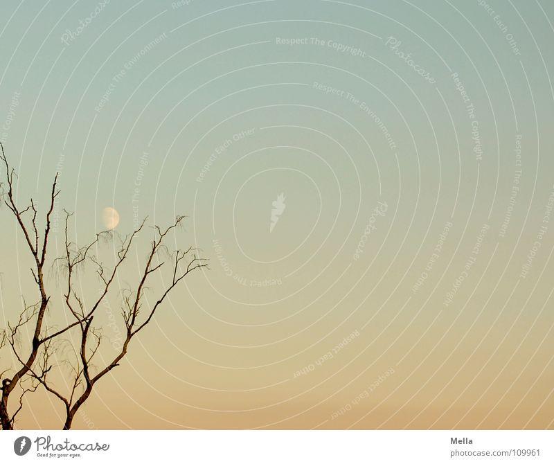 Mondbaum Baum Abend laublos Herbst Pastellton ruhig Himmel blau orange Ast Zweig Kontrast Silhouette